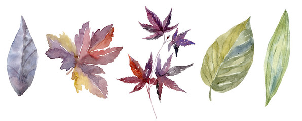 Watercolor leaf set or forest foliage collection © vectorgirl