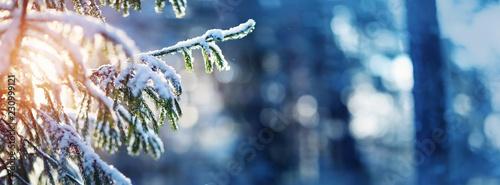Leinwandbild Motiv Beautiful tree in winter landscape in late evening in snowfall