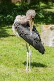 bird, heron, animal, wildlife, nature, beak, stork, crane, water, wild, grey, feather, white, grass, pelican, green, river, birds, park, animals, bill, pond, beautiful, feathers, egret