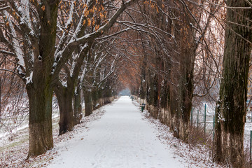 longest european linden alley in winter. walking path covered with snow