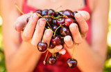 Cherries in the hands of a girl