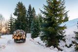 truck transporting wood through forest. dangerous job or illegal cutting concept. road and slope in snow © Pellinni