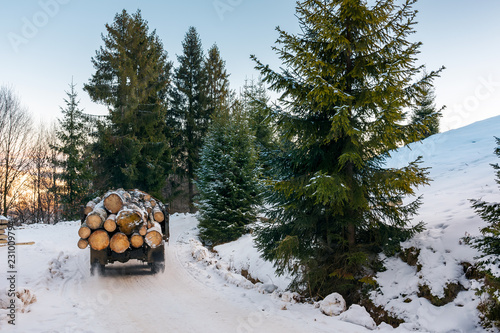 Leinwanddruck Bild truck transporting wood through forest. dangerous job or illegal cutting concept. road and slope in snow