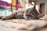 repos sur le tapis © Eléonore H