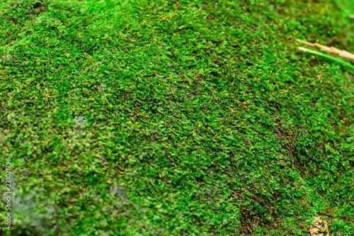Moss - 231021796