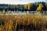 Autumn scenes, down from the reeds and the lake in the background - 231036996