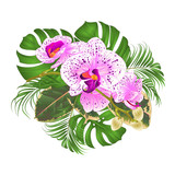 Bouquet with tropical flowers  floral arrangement, with beautiful purple and white orchid Phalaenopsis  palm,philodendron and ficus on a white background vintage vector illustration  - 231040779