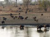 afrique du sud - 231053906