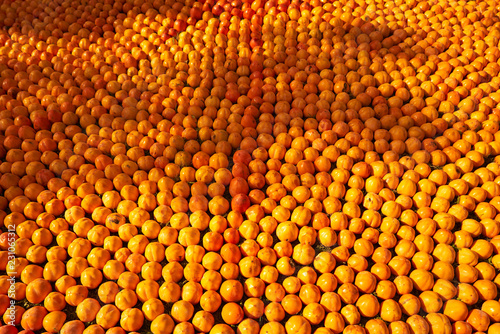 Abstract fruit food background, close-up. Agriculture concept with fresh fruits. Yellow orange persimmon background, outdoors - 231065312