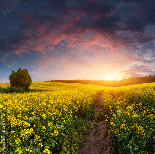 Foto Murales Summer Landscape with a field of yellow flowers