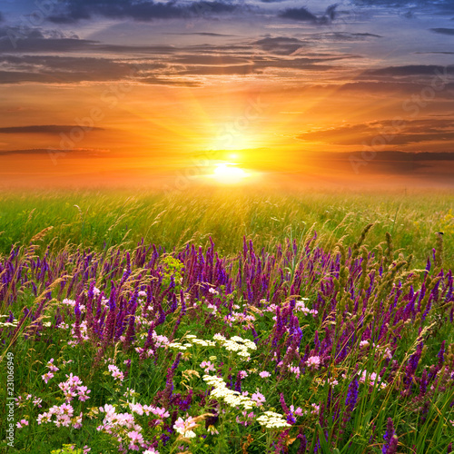 Summer landscape with sunset in steppe - 231066949