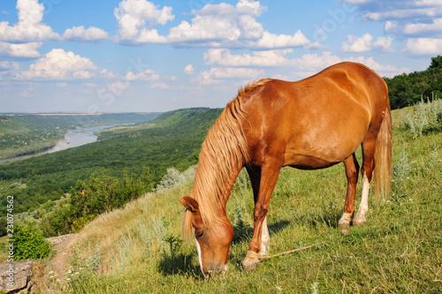 Red horse grazing at meadow