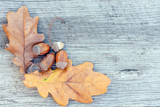 acorns and oak leaves on a wooden background