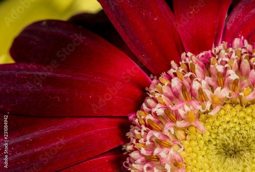 Flower detail - 231084942