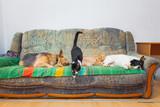 Pet family sitting on the sofa - 231096549