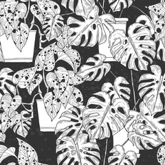 Seamless pattern with  Scindapsus aureus Eagler and  Monstera  in pots on black background. Vector monochrome illustration. © maritime_m