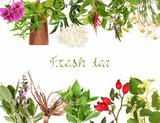 Collection of fresh tea plants - 231143900