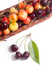 Yellow and red sweet cherry in basket with green leaf isolate on white.