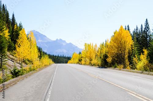 秋のカナディアンロッキー アイスフィールド・パークウェイ(カナダ・アルバータ州)