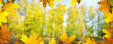 Panoramic autumn background. Landscape in the park. - 231160797