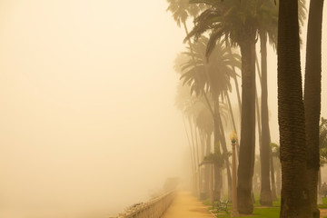 Foggy Santa Monica Morning, California palm trees in the early morning haze