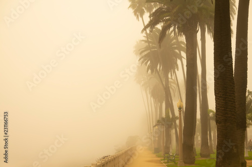 Foggy Santa Monica Morning, California palm trees in the early morning haze - 231166753