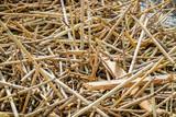 alluvial broken reed - 231172180