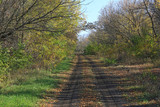 dirt road in autumn forest - 231183773