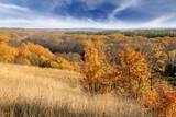 Nice Autumn landscape - 231183901