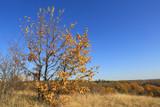 autumn tree on meadow - 231183929
