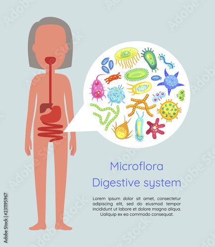 Microflora Digestive System Vector Illustration