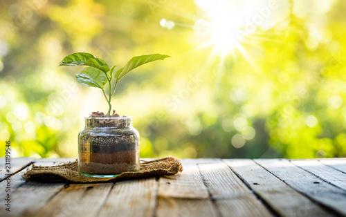 Leinwanddruck Bild Plant growing on organic fertiliser stack inside glass with sunlight and warm environment
