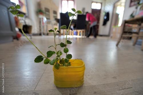jeunes plants, plante verte dans la maison