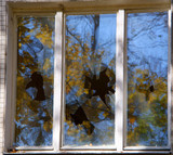 Broken windows of residential homes in close-up - 231221149