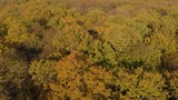 camera moving above the trees in the green forest (aerial view) - 231225334