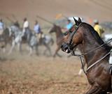 caballo - 231226928