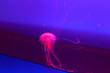 Leinwandbild Motiv neon jellyfish in water