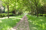 Walking path between green trees, grass with wildflowers in a park, on a spring day . - 231243527