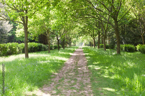 Foto Murales Walking path between green trees, grass with wildflowers in a park, on a spring day .