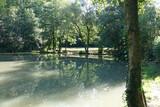 Teich bei Löwenstein - 231245733
