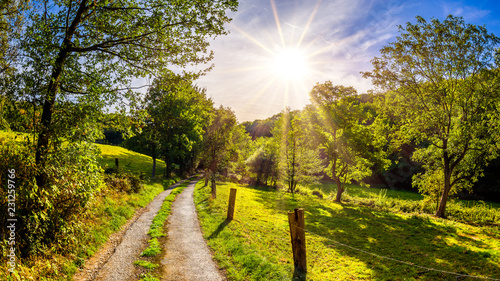 Wall mural Landscape in summer with meadows, forest and trees beside a road
