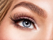 Macro Shot of Young  Woman's Beautiful Eye.