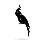 Black Parrot icon, illustration on white background