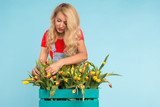 Floristics, holidays, flower shop and people concept - Beautiful blond young woman fixing bouquet of tulips on blue background. - 231291144