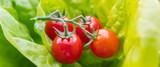 Cherry Tomaten im Salat