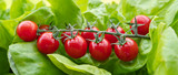 Frische rote cherry Tomaten im grünen Salat © Tobias.S