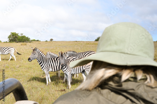 Woman in African safari watching and taking photos of zebras and other wildlife at sunrise. Close-up shot with a warm and energetic atmosphere.