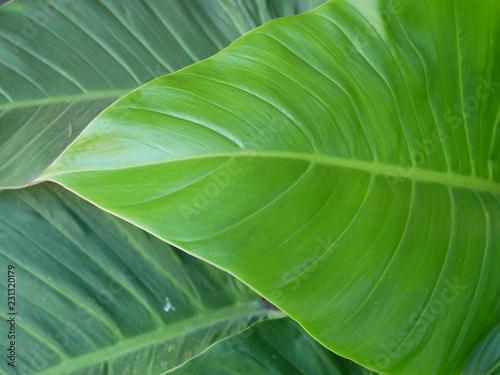 green leaf texture background - 231320179