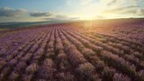 Aerial nature video. Flight over lavender meadow. Agriculture industry scene. Nature scene composition. - 231329784