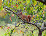 squirrel on a tree - 231341334